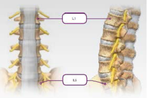 Anterior Lumbar Interbody Fusion (ALIF) | What is It and is It Right for Me